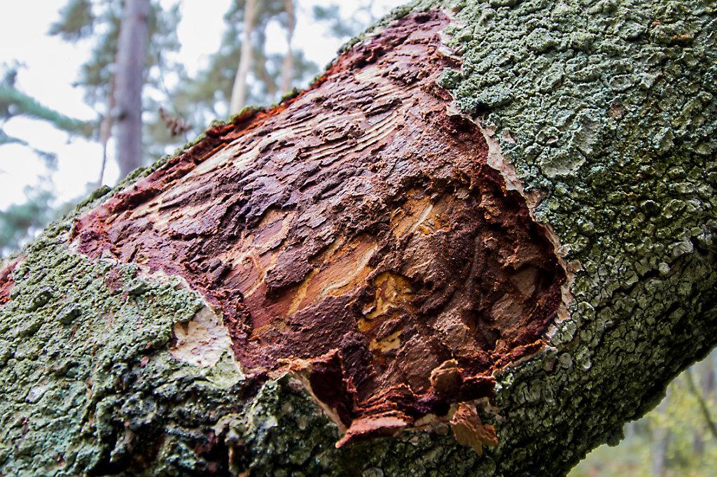 open bark