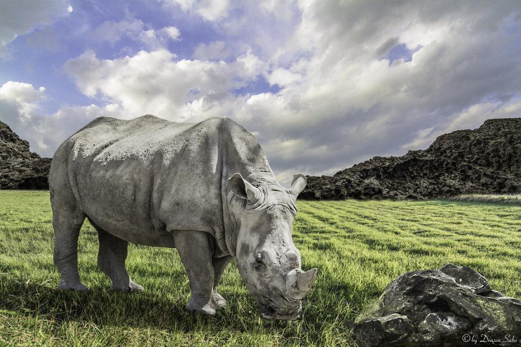 lone rhino